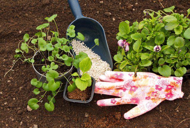 Лучшие удобрения для сада и огорода