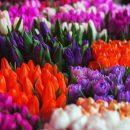 Где купить цветы оптом